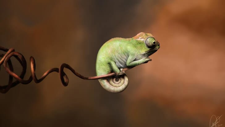 Baby Chameleon Perching On a Twisted Branch Wallpaper