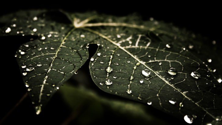 Droplets On Leaves Wallpaper