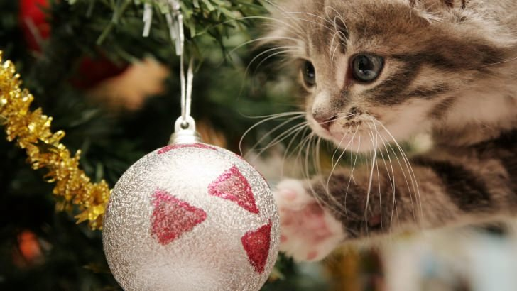 Kitten Playing With Christmas Ornaments Wallpaper