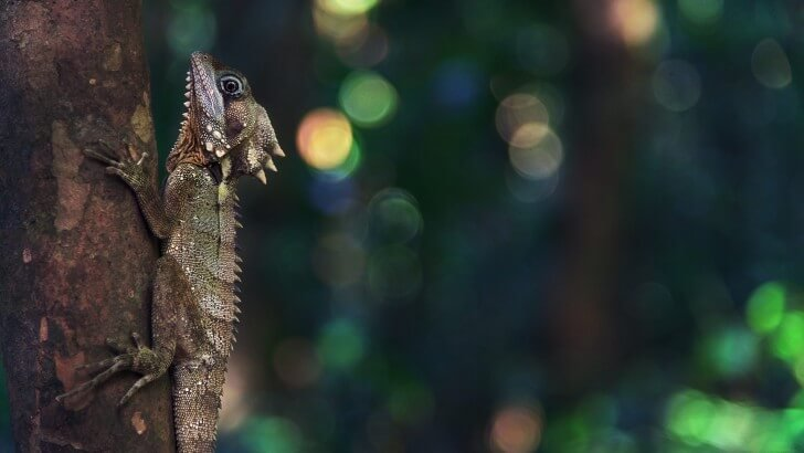 Lizard Clinging to a Tree Wallpaper