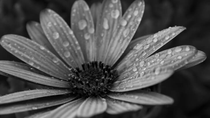 Macro Floral Black & White Wallpaper