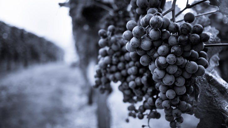 Monochrome Grape Plantation Wallpaper
