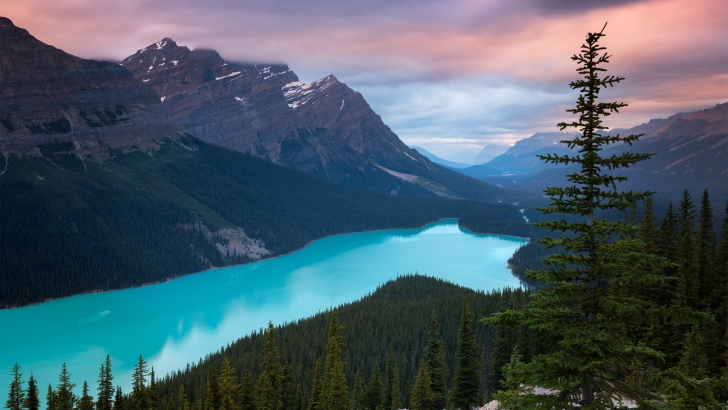 Peyto Lake Canada Wallpaper