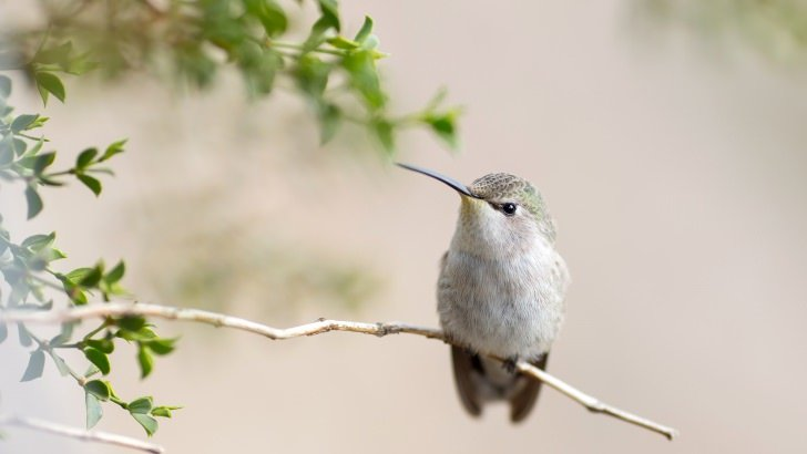 Posing Hummingbird Wallpaper
