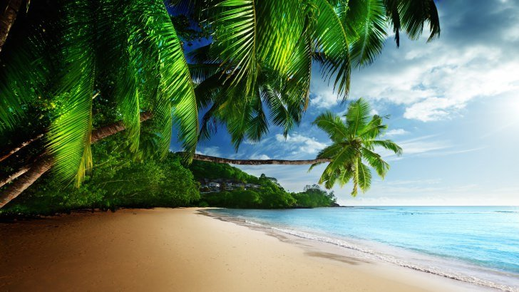 Tropical Paradise Beach Wallpaper - Nature HD Wallpapers ...