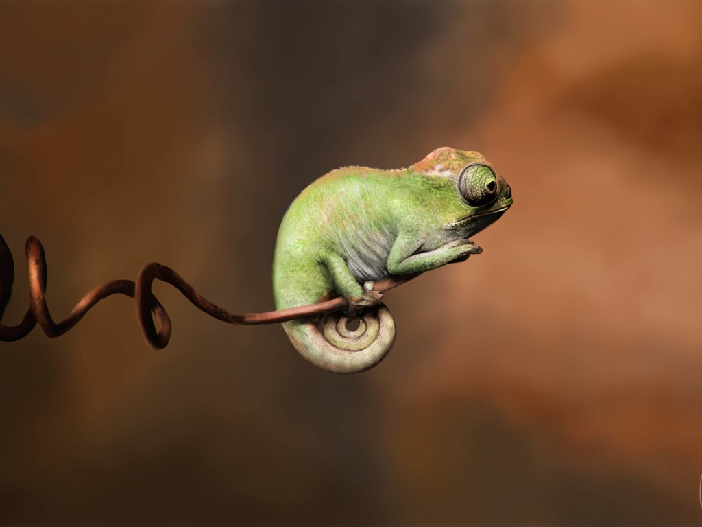 Baby Chameleon Perching On a Twisted Branch Wallpaper for Desktop 1024x768