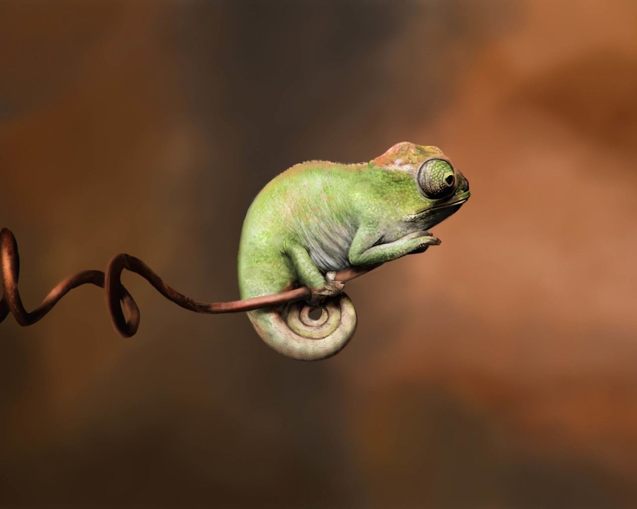 Baby Chameleon Perching On a Twisted Branch Wallpaper for Desktop 1280x1024