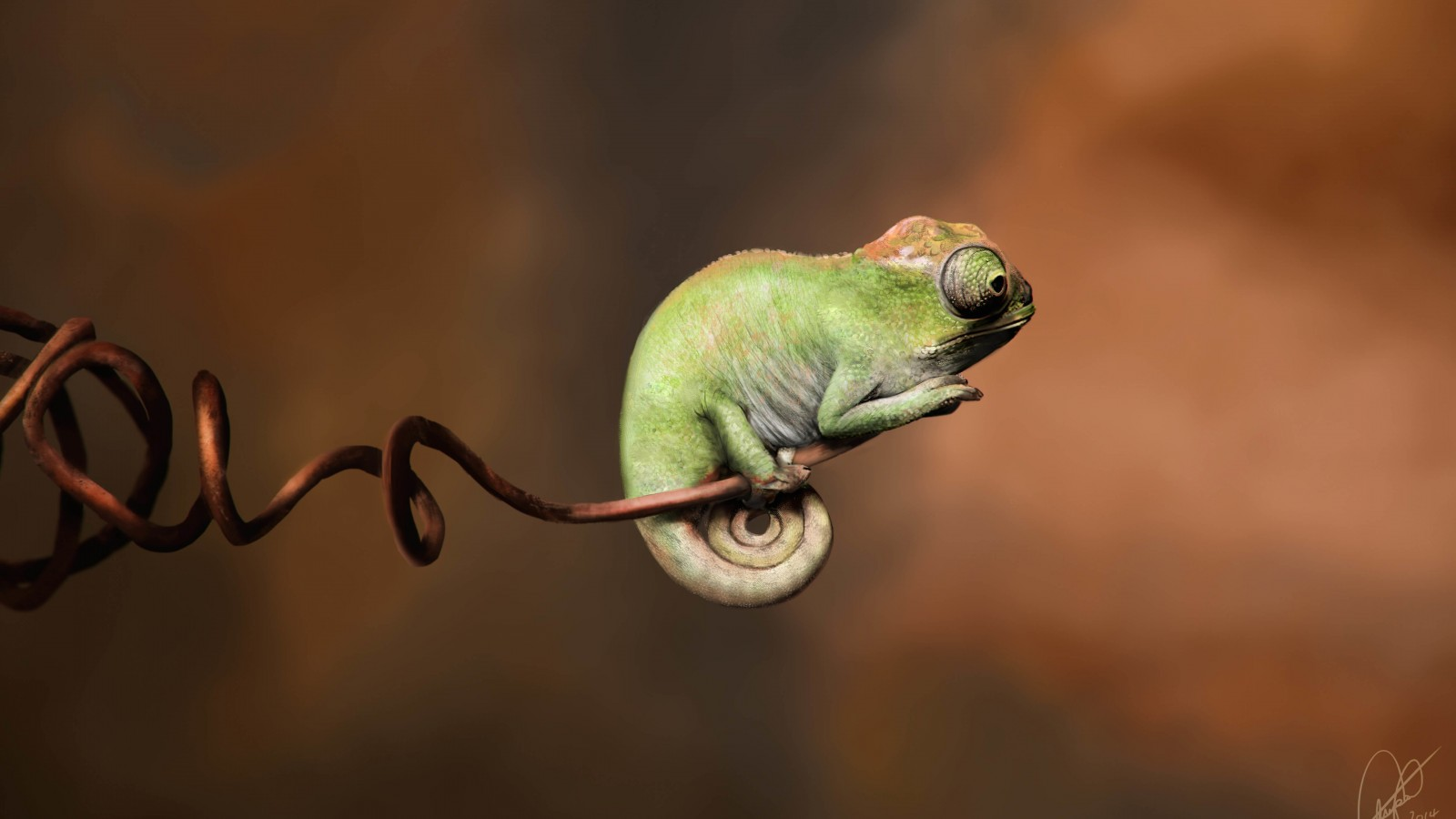 Baby Chameleon Perching On a Twisted Branch Wallpaper for Desktop 1600x900