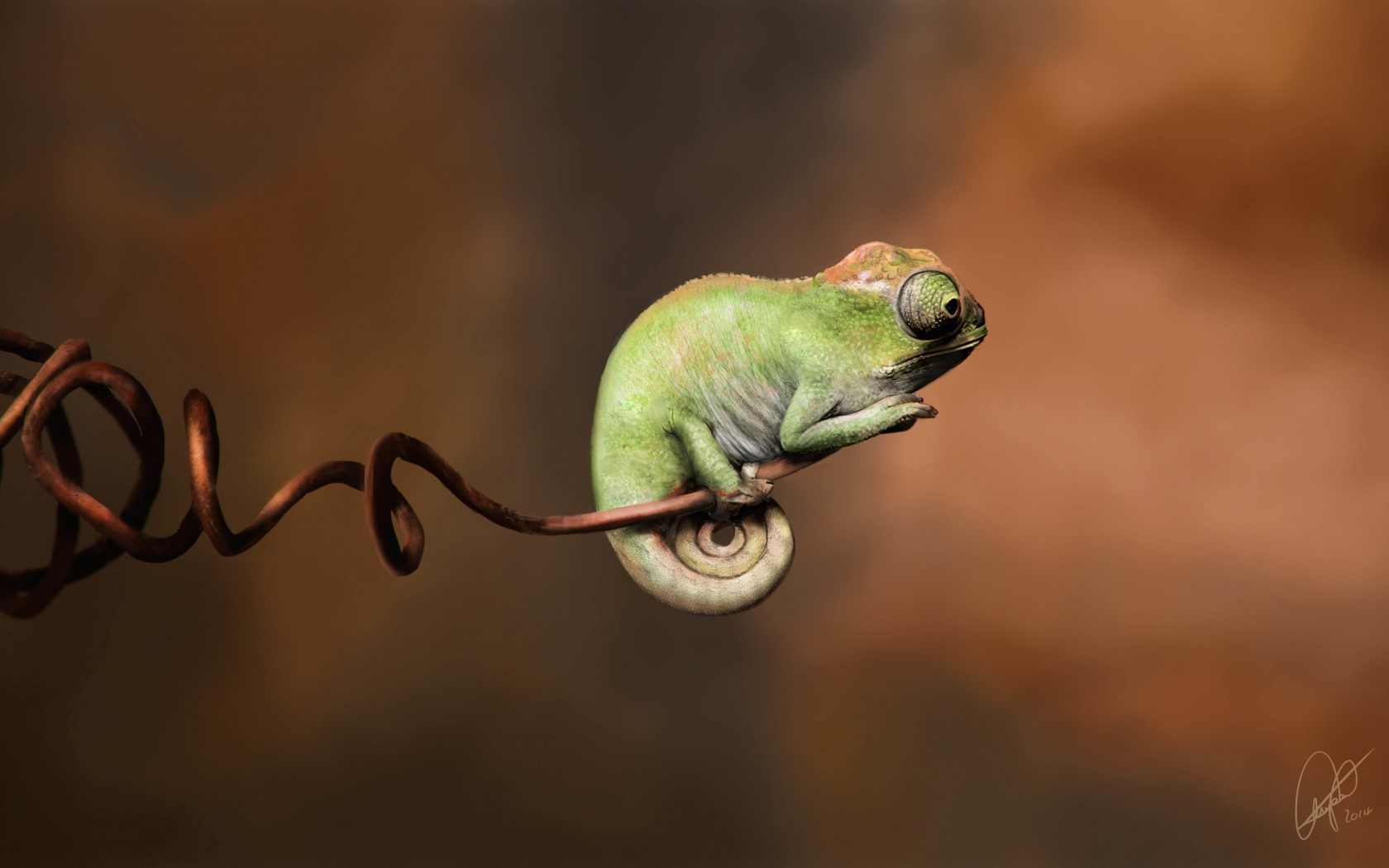 Baby Chameleon Perching On a Twisted Branch Wallpaper for Desktop 1680x1050
