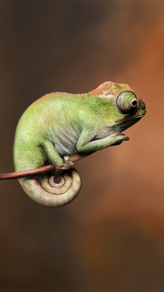 Baby Chameleon Perching On a Twisted Branch Wallpaper for SAMSUNG Galaxy S4 Mini