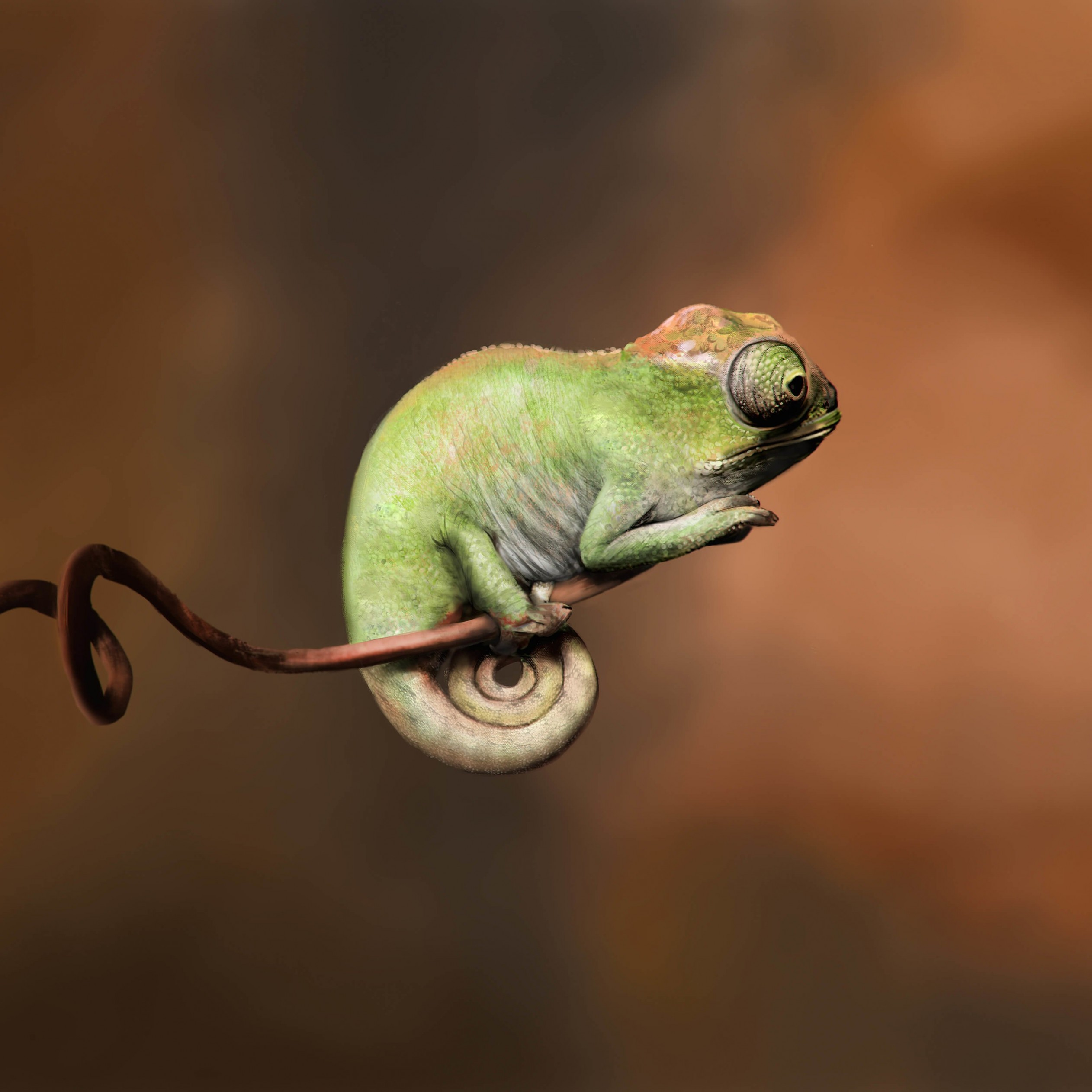 Baby Chameleon Perching On a Twisted Branch Wallpaper for Apple iPad 3