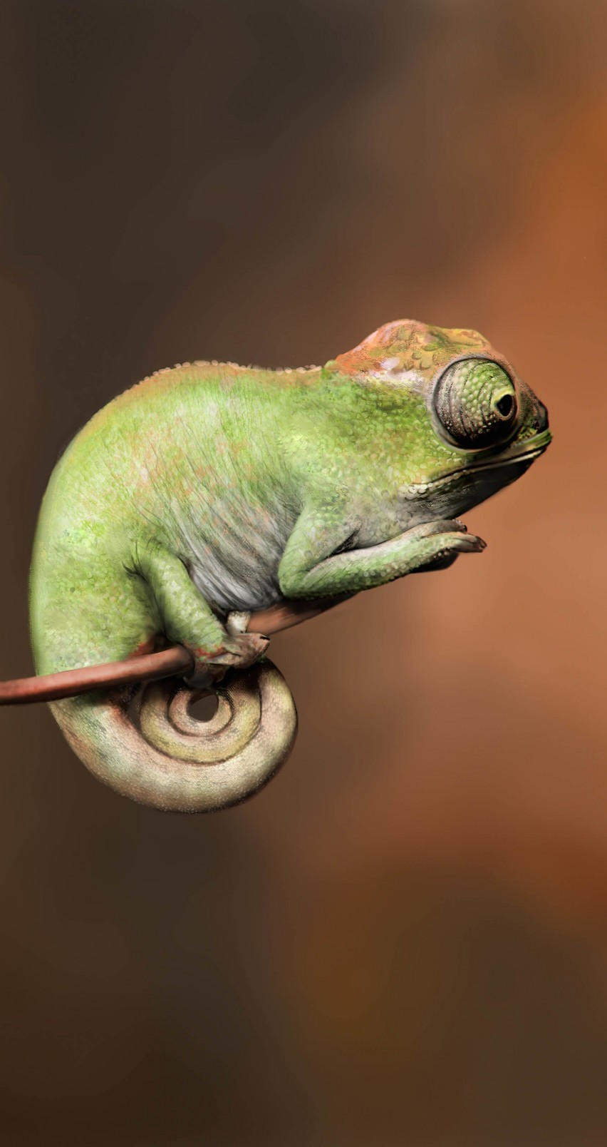 Baby Chameleon Perching On a Twisted Branch Wallpaper for Apple iPhone 6 / 6s