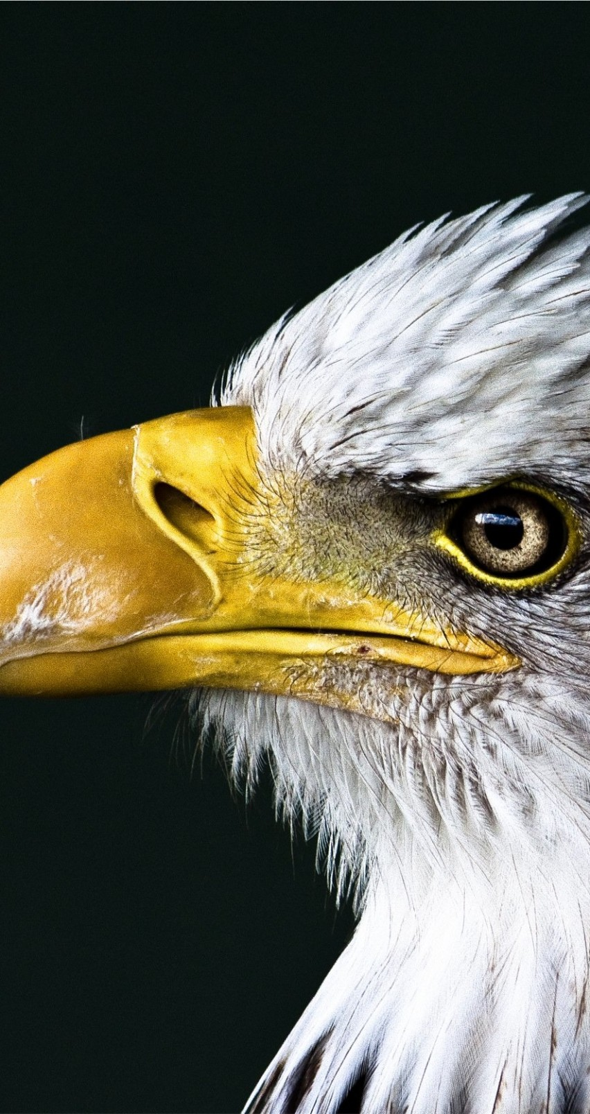 Bald Eagle Beak Wallpaper for Apple iPhone 6 / 6s