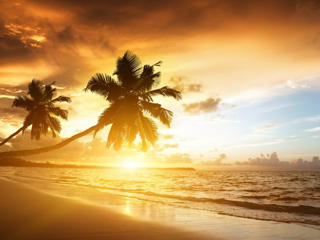 Beach With Palm Trees At Sunset Wallpaper for Desktop 1024x768