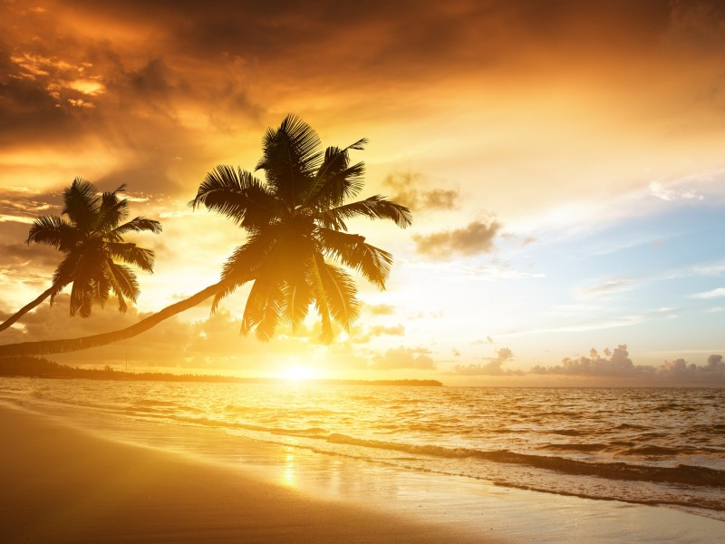 Beach With Palm Trees At Sunset Wallpaper for Desktop 800x600