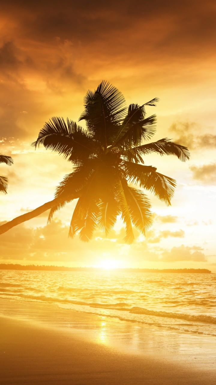 Beach With Palm Trees At Sunset Wallpaper for SAMSUNG Galaxy S5 Mini