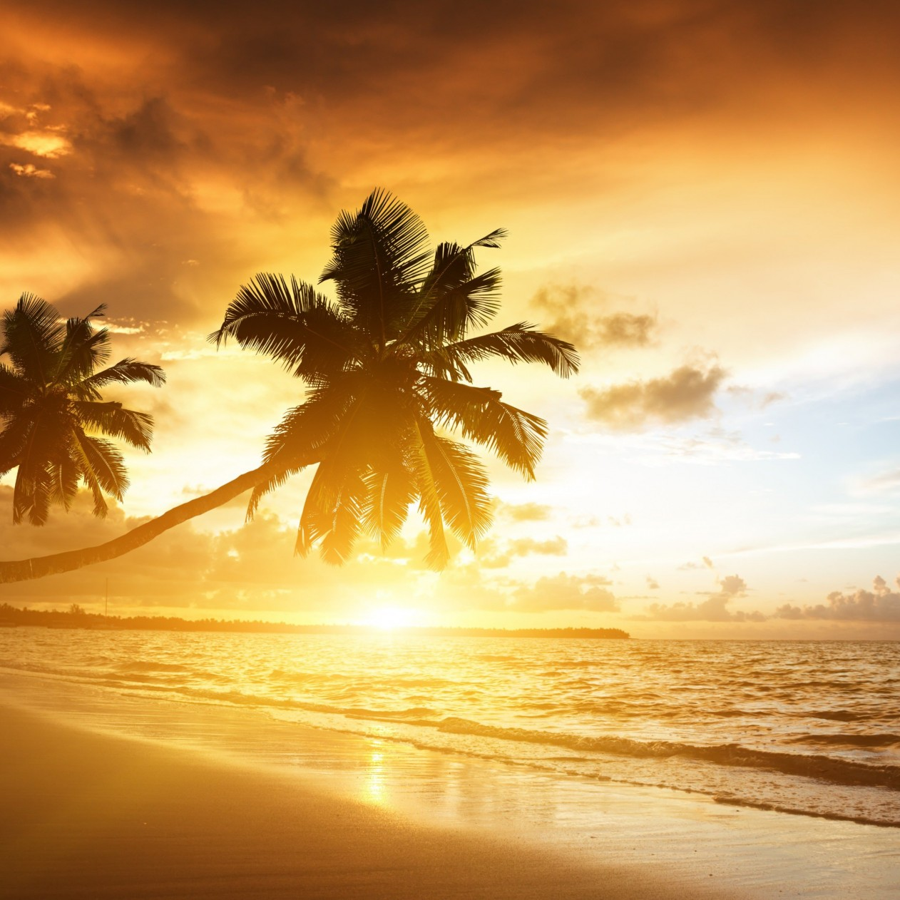 Beach With Palm Trees At Sunset Wallpaper for Apple iPad mini