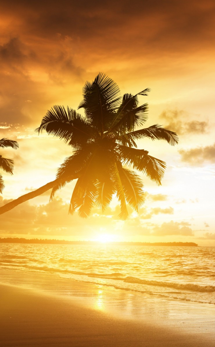 Beach With Palm Trees At Sunset Wallpaper for Apple iPhone 4 / 4s