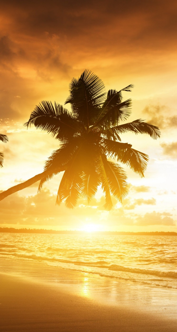 Beach With Palm Trees At Sunset Wallpaper for Apple iPhone 5 / 5s