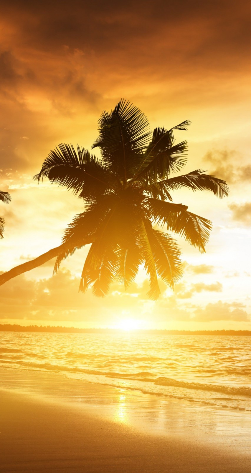 Beach With Palm Trees At Sunset Wallpaper for Apple iPhone 6 / 6s