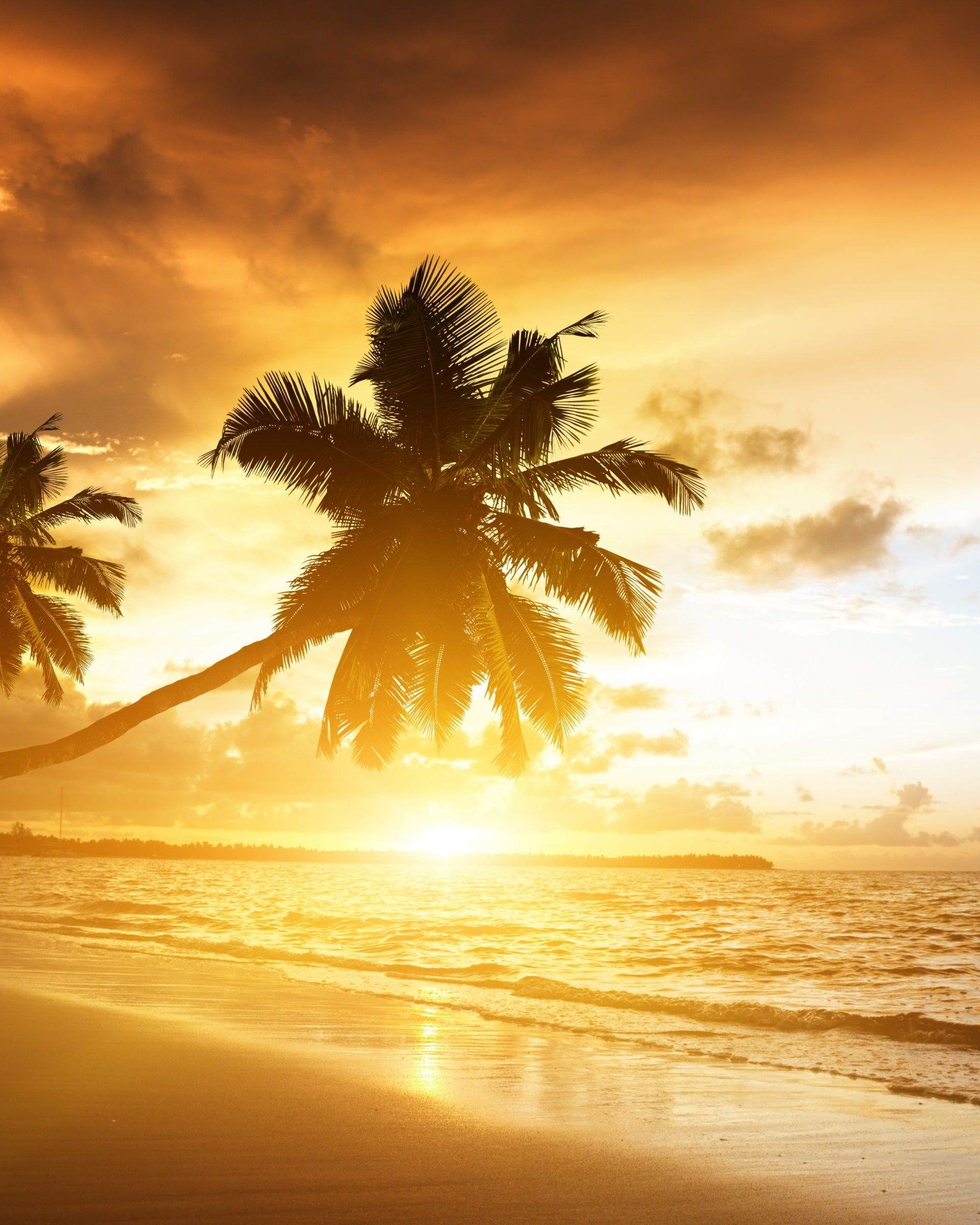 Beach With Palm Trees At Sunset Wallpaper for Google Nexus 7