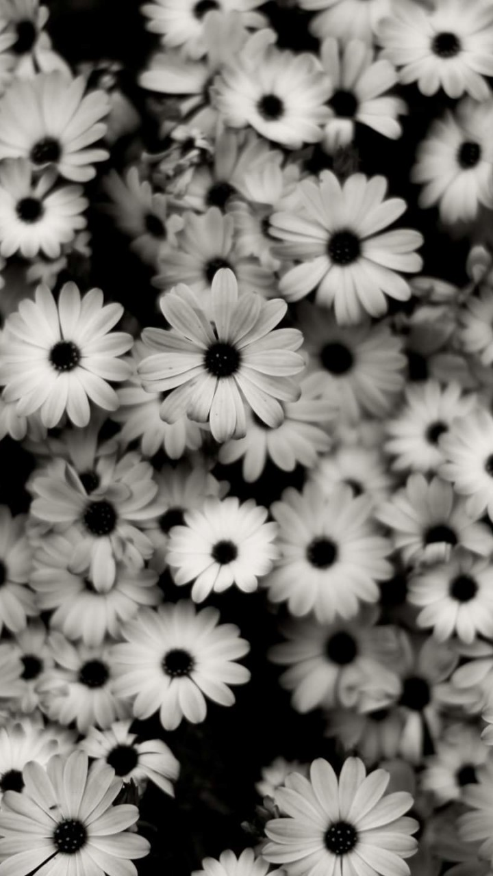 Black & White Daisies Wallpaper for HTC One mini