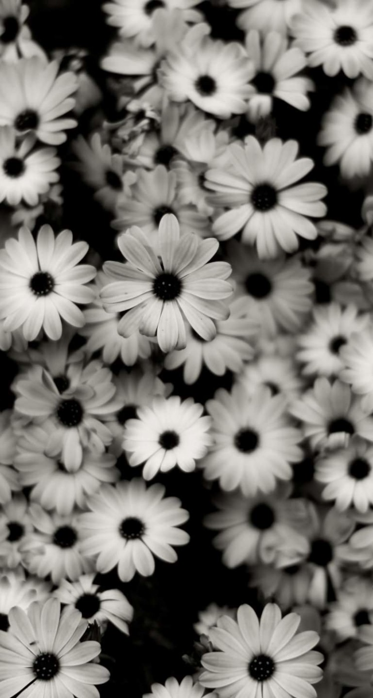 Black & White Daisies Wallpaper for Apple iPhone 5 / 5s