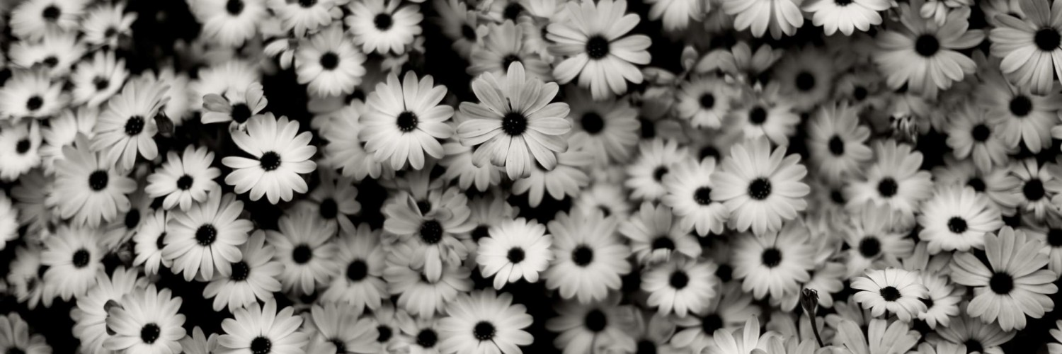 Black & White Daisies HD wallpaper for Twitter Header ...