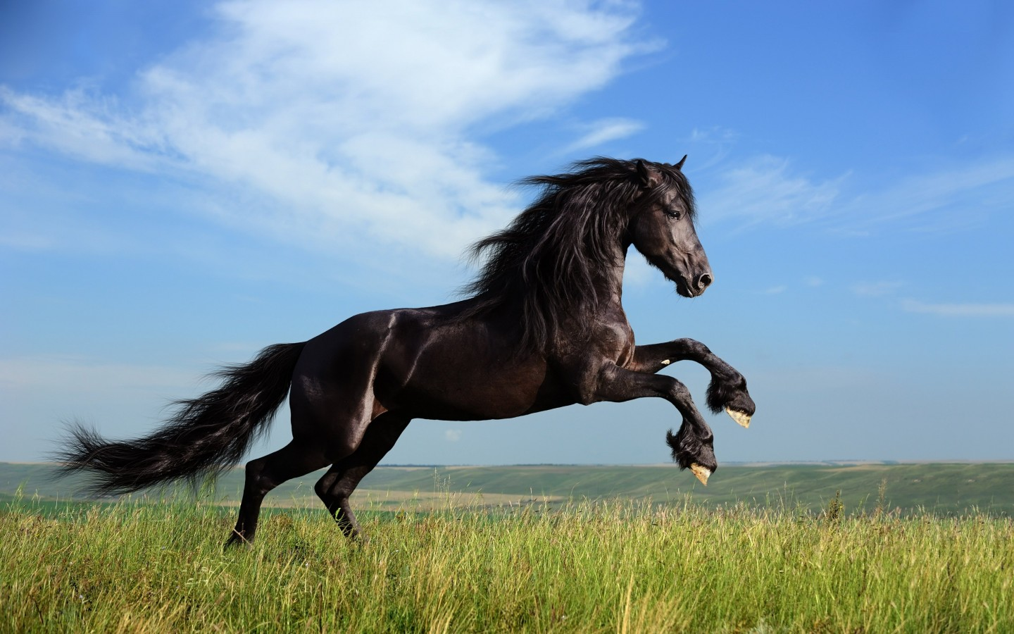Black Horse Running Wallpaper for Desktop 1440x900