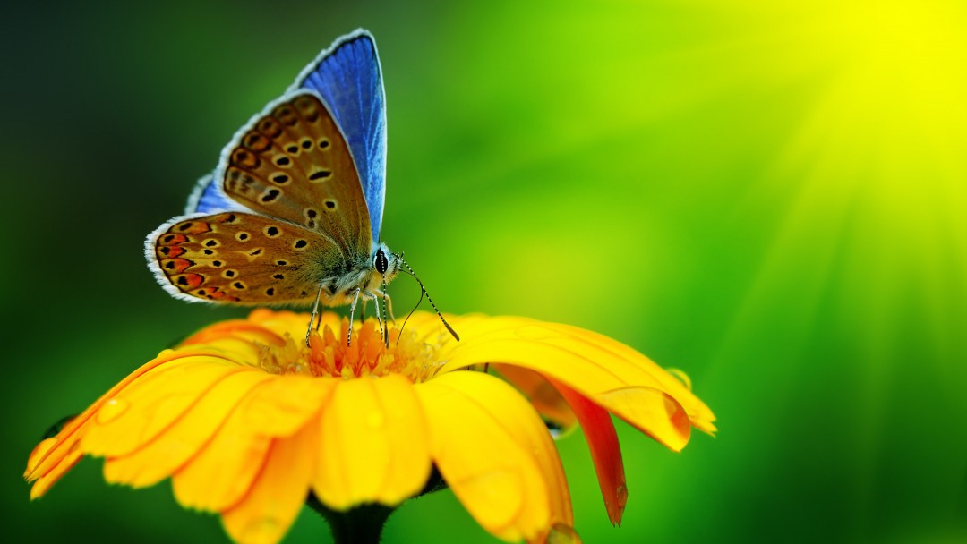 Butterfly Collecting Pollen Wallpaper for Social Media Google Plus Cover