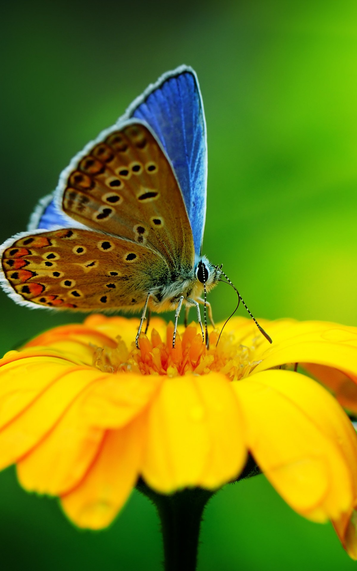 Butterfly Collecting Pollen Wallpaper for Amazon Kindle Fire HDX