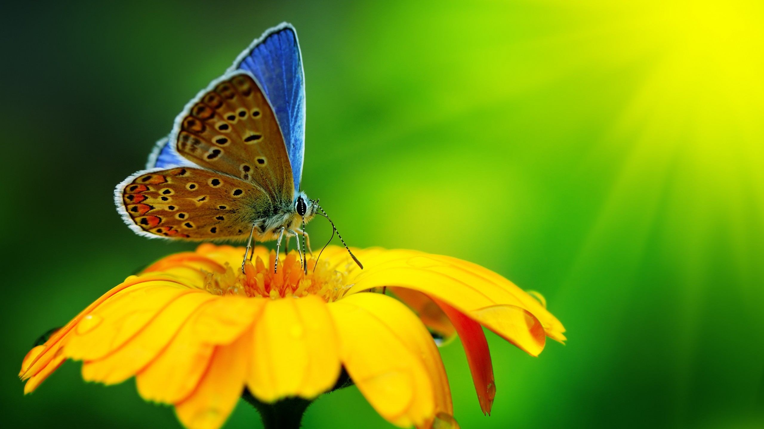 Butterfly Collecting Pollen Wallpaper for Social Media YouTube Channel Art