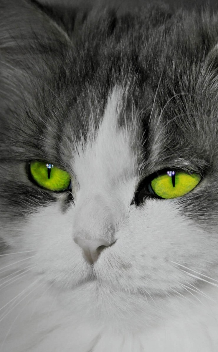 Cat With Stunningly Green Eyes Wallpaper for Apple iPhone 4 / 4s