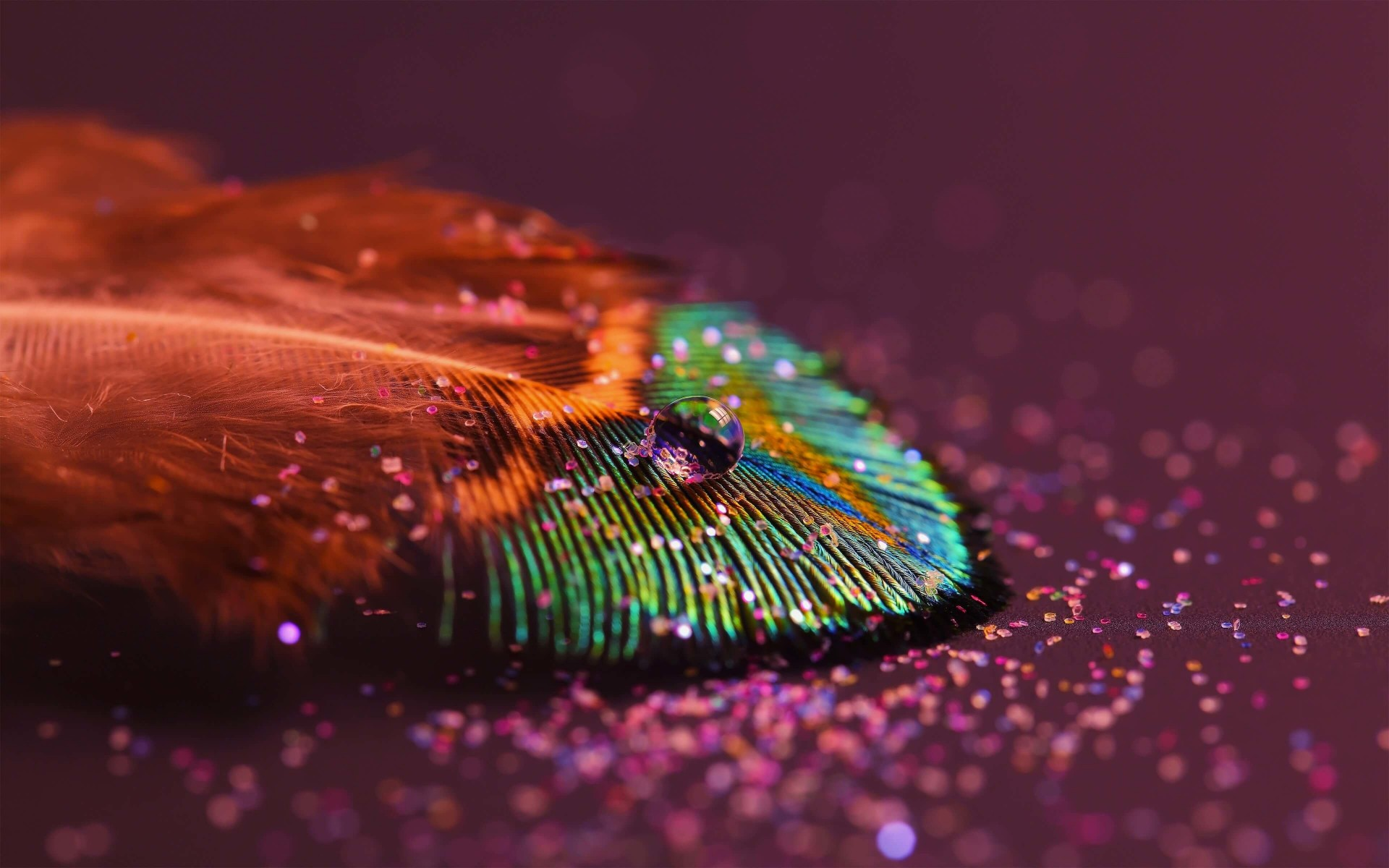 Colorful Feather Wallpaper for Desktop 1920x1200