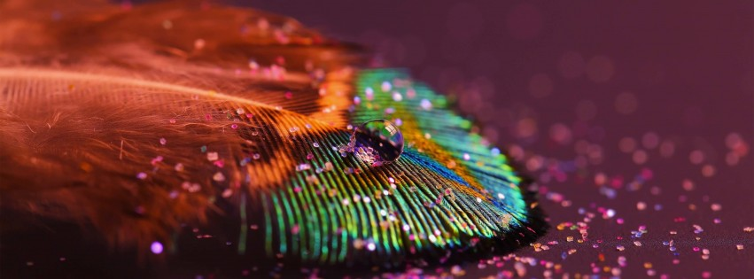 Colorful Feather Wallpaper for Social Media Facebook Cover
