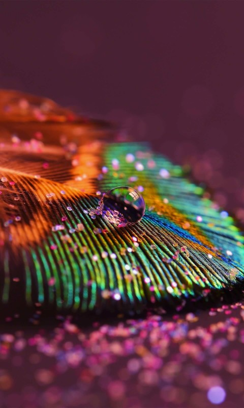 Colorful Feather Wallpaper for HTC Desire HD