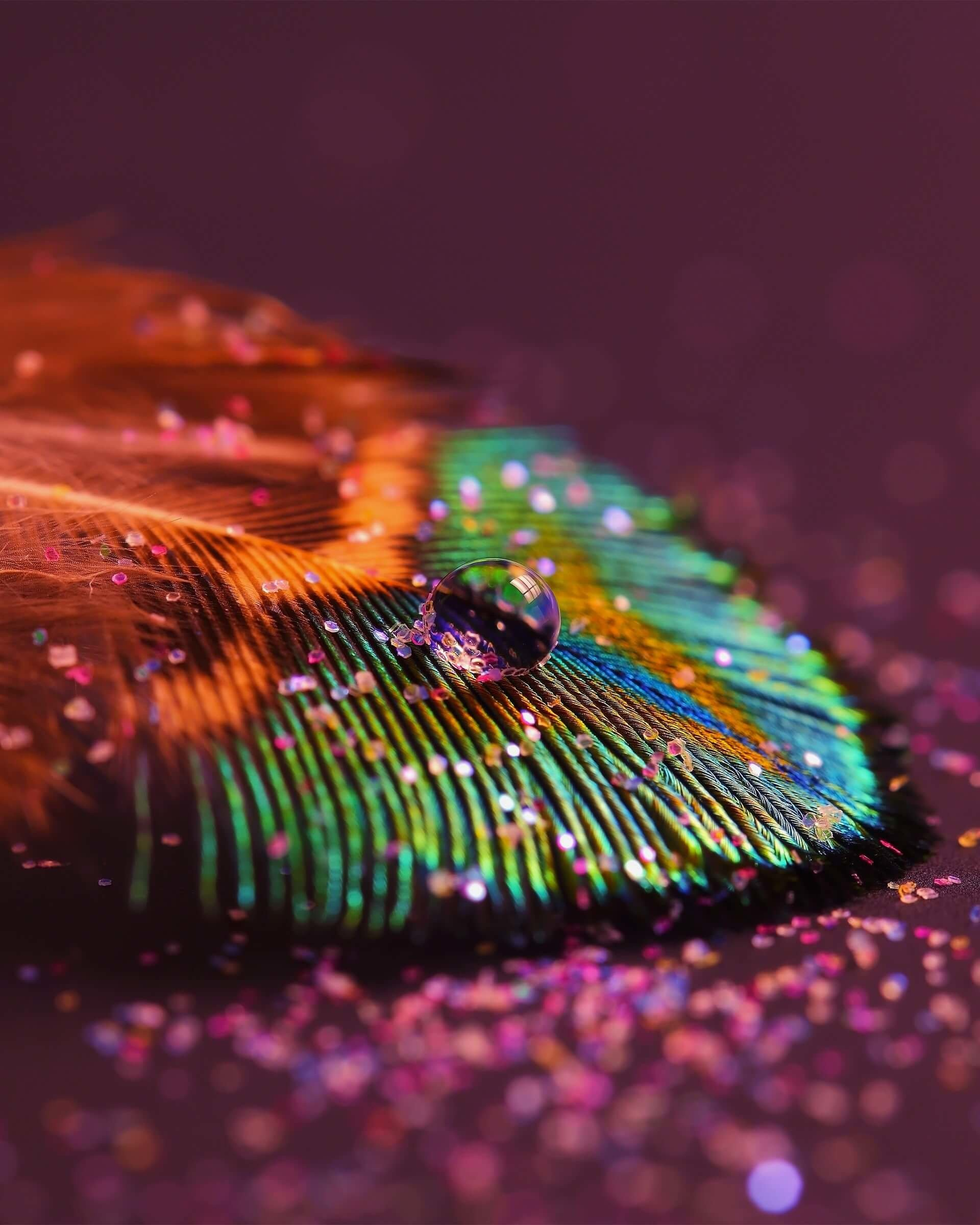 Colorful Feather Wallpaper for Google Nexus 7