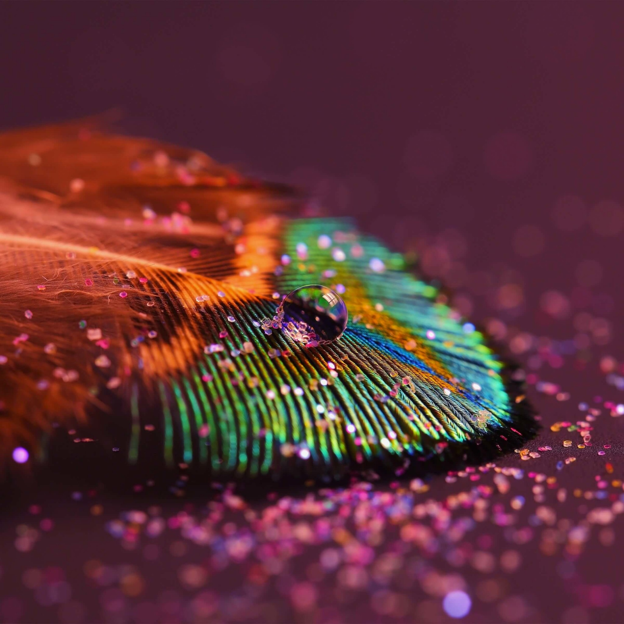 Colorful Feather Wallpaper for Google Nexus 9