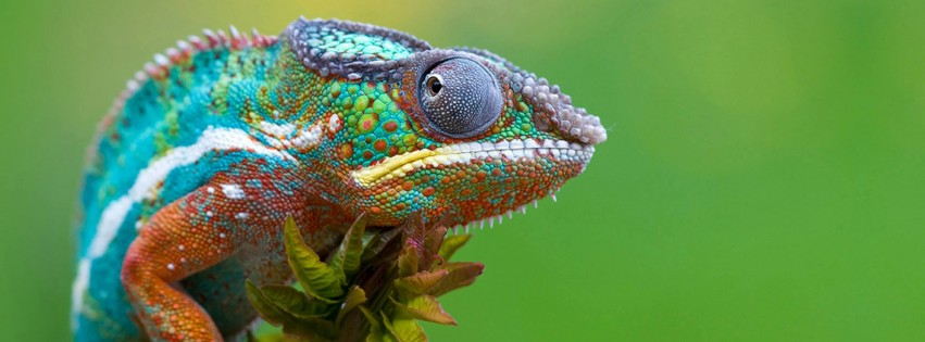 Colorful Panther Chameleon Wallpaper for Social Media Facebook Cover