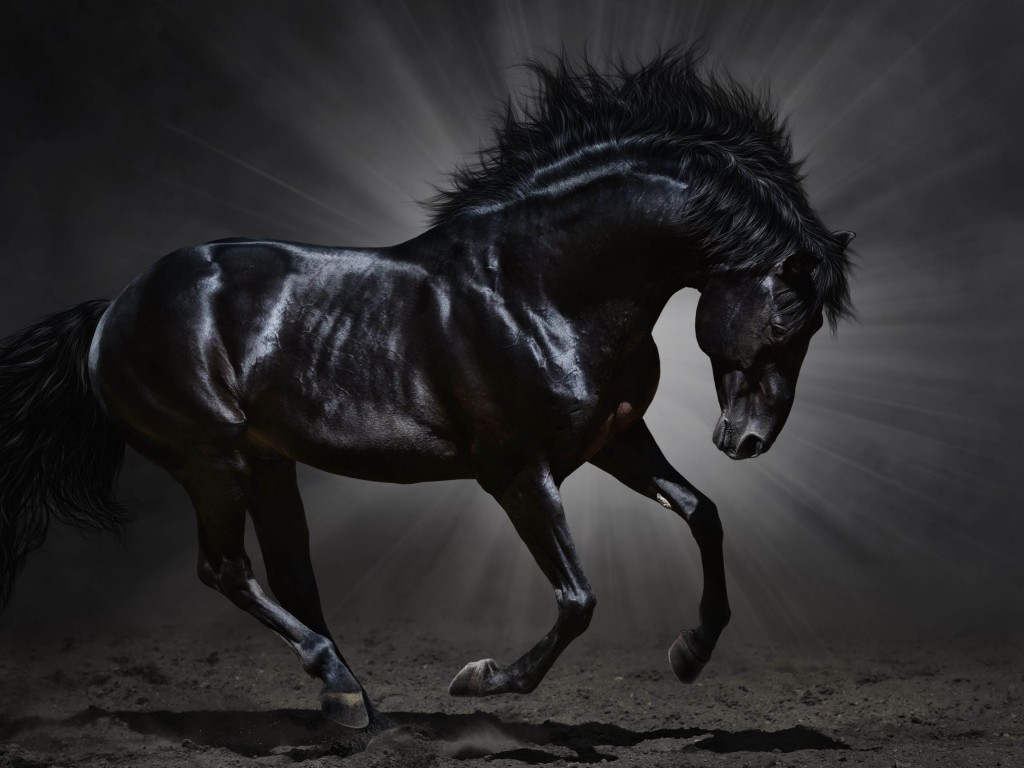 Dark Horse Wallpaper for Desktop 1024x768