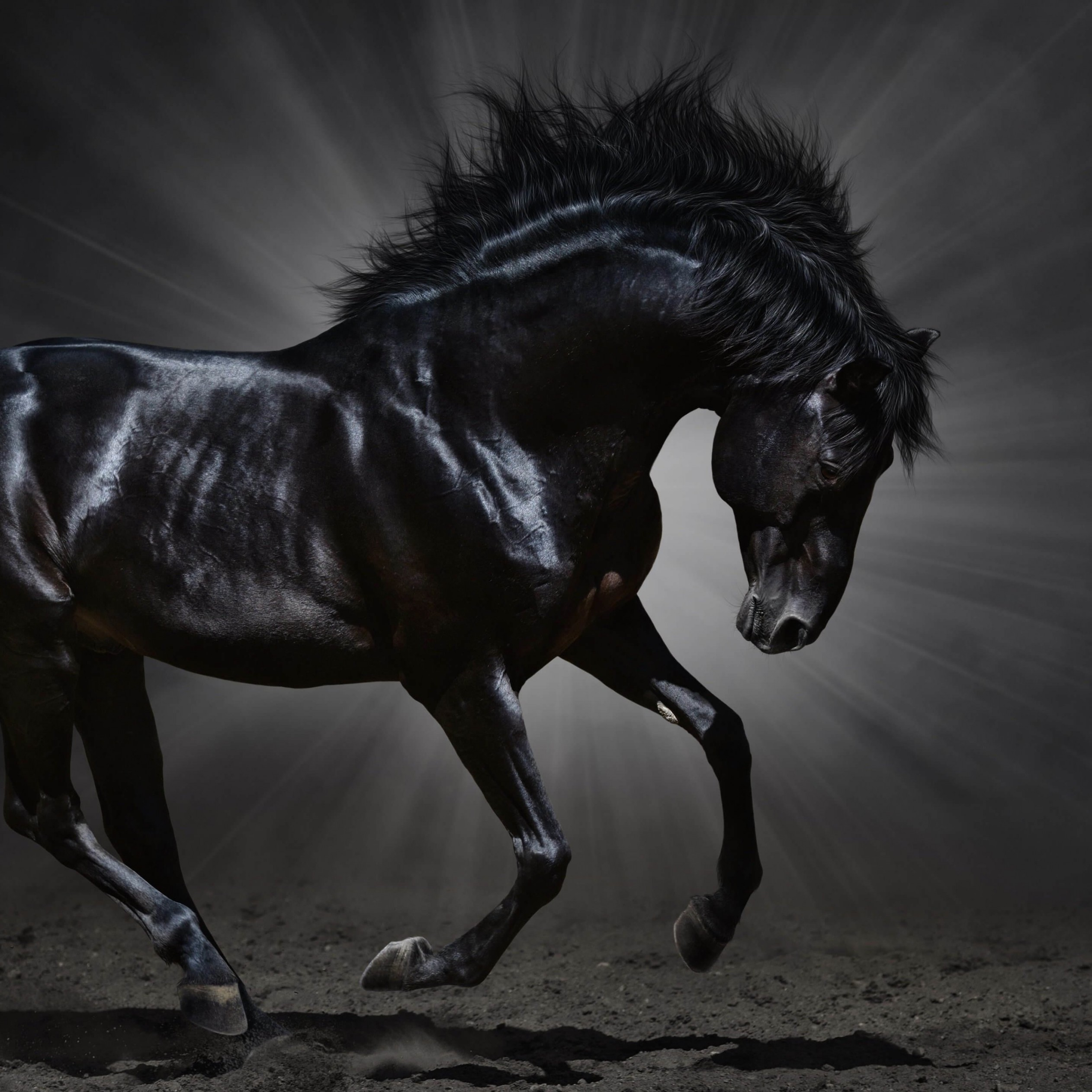 Dark Horse Wallpaper for Apple iPad 3