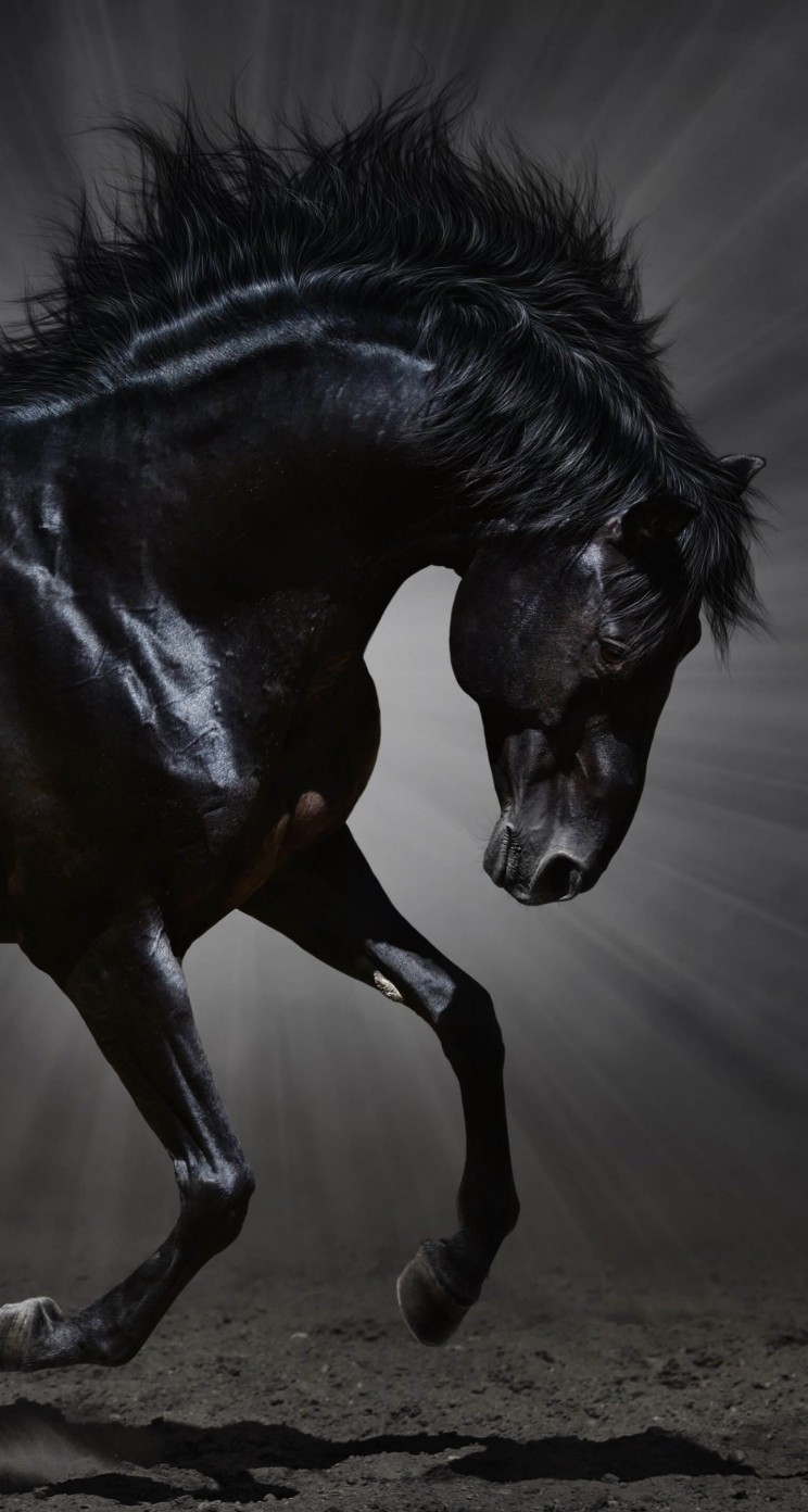 Dark Horse Wallpaper for Apple iPhone 5 / 5s