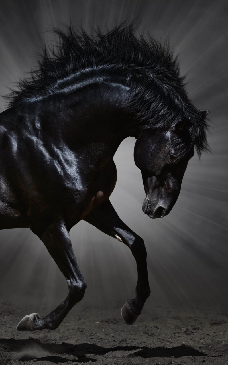 Dark Horse Wallpaper for Amazon Kindle Fire HD