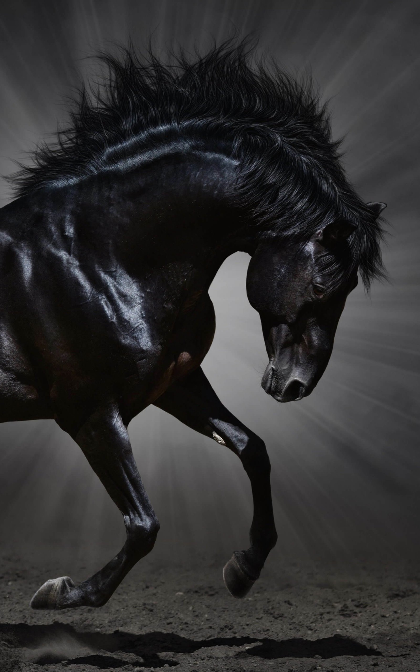 Dark Horse Wallpaper for Amazon Kindle Fire HDX 8.9