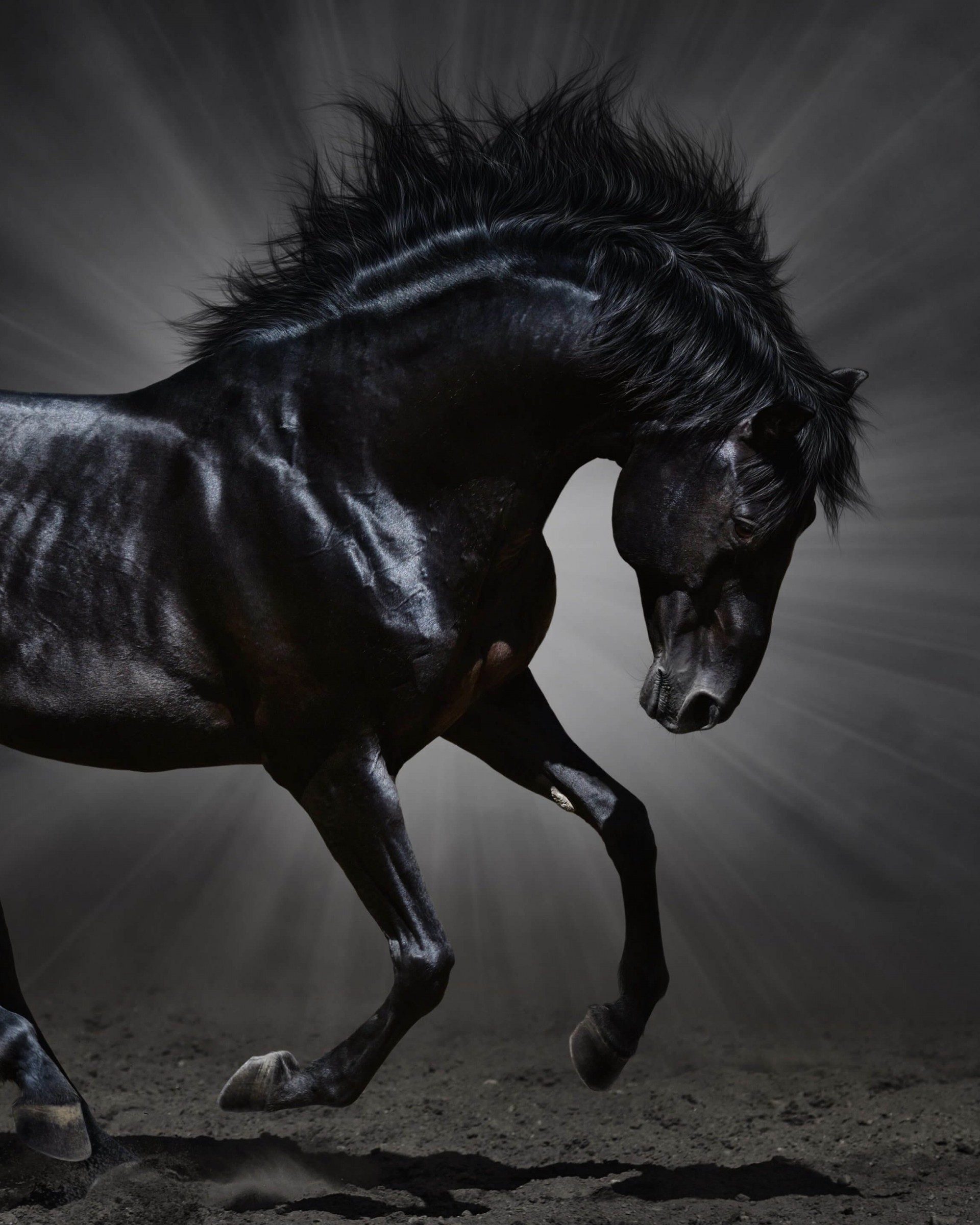 Dark Horse Wallpaper for Google Nexus 7
