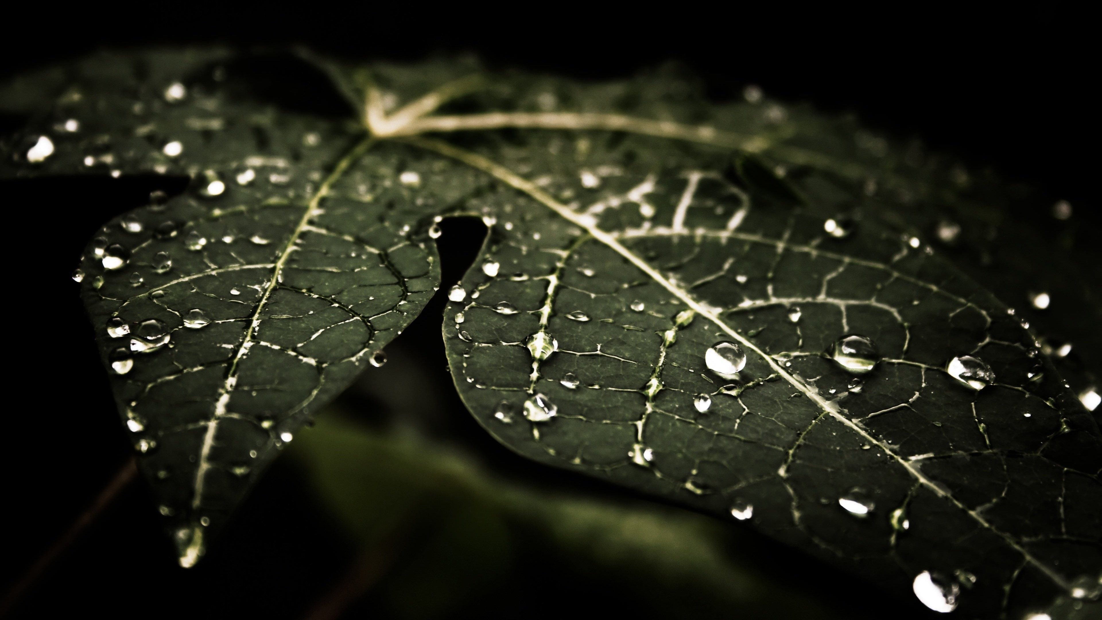 Droplets On Leaves Wallpaper for Desktop 4K 3840x2160