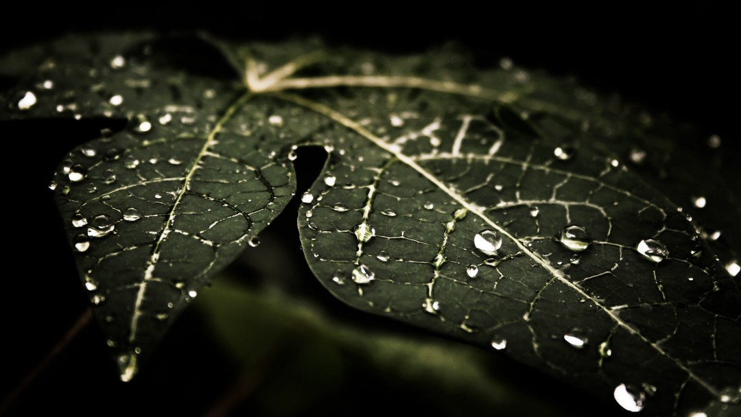 Droplets On Leaves Wallpaper for Social Media Google Plus Cover