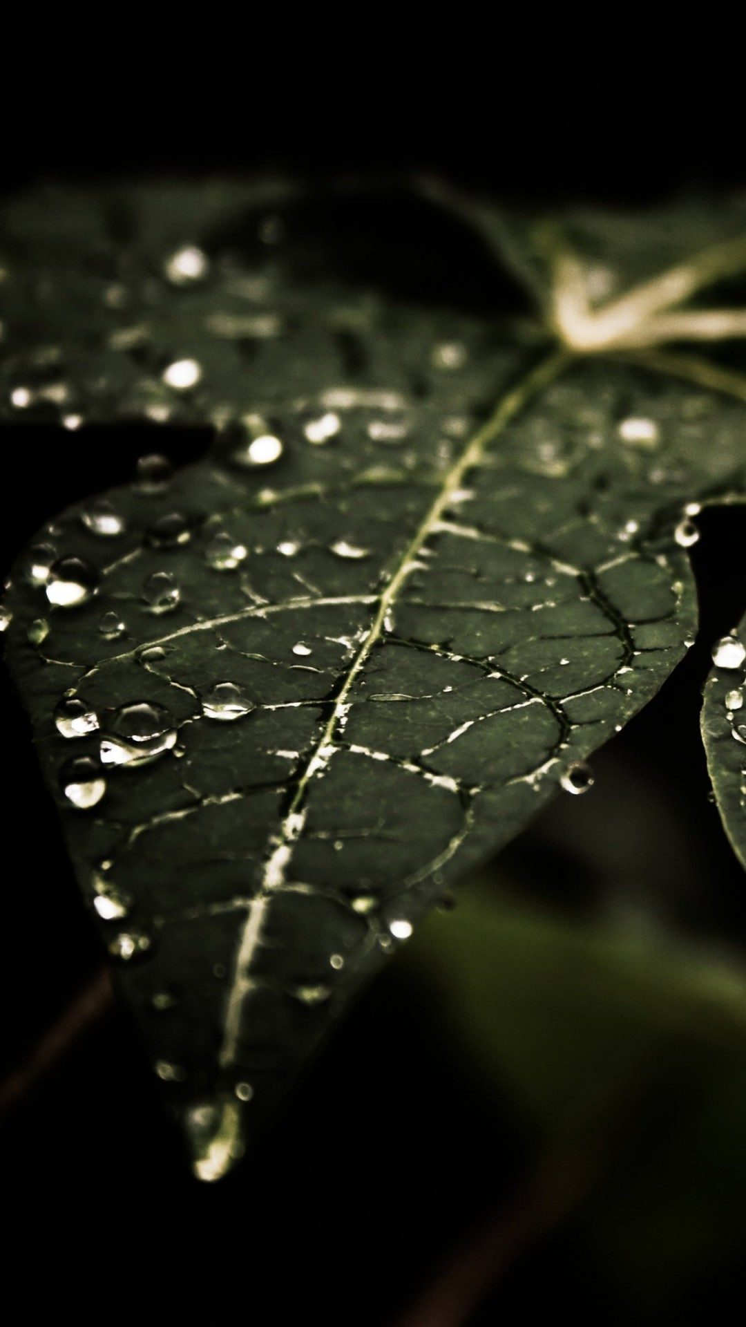 Droplets On Leaves Wallpaper for LG G2