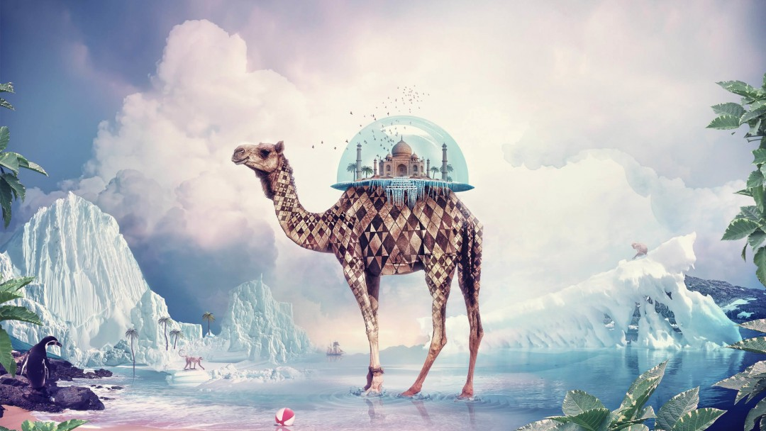 Fantasy Camel Wallpaper for Social Media Google Plus Cover