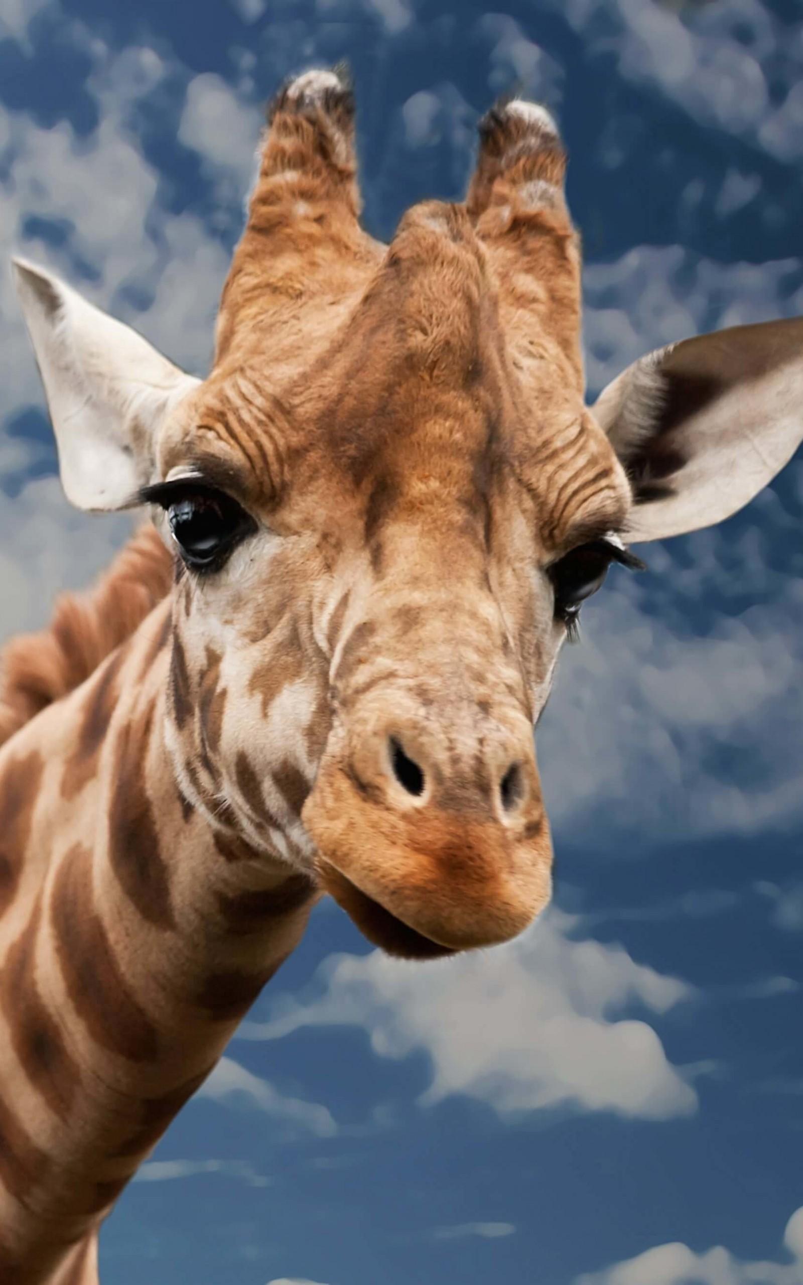 Африка Животные Африки Животные Саванны  Развитие детей